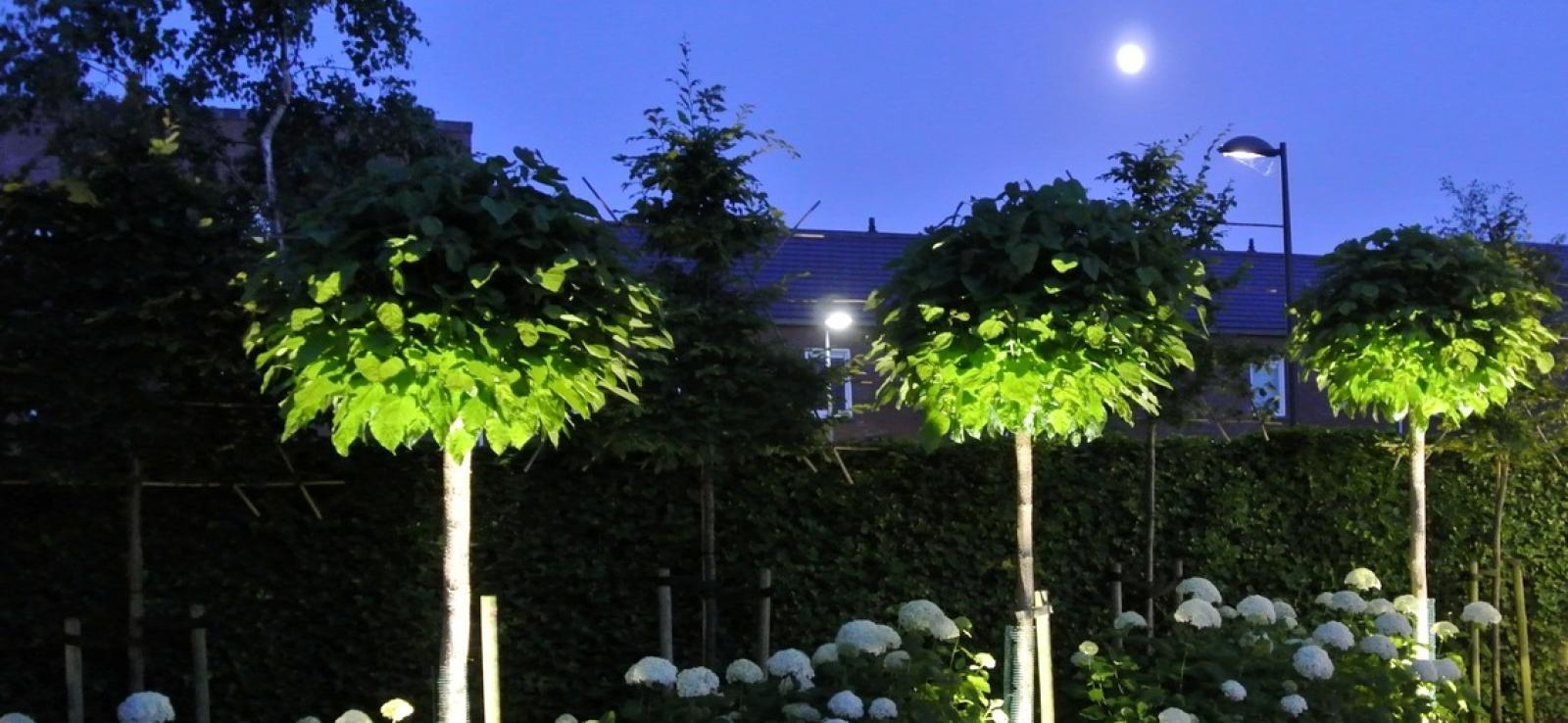 aanlichten bomen
